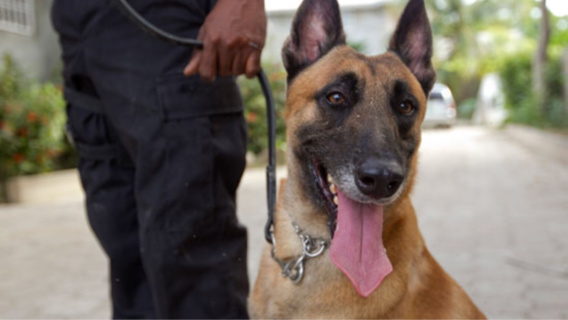 Le voleur de téléphone a été interpellé par les policiers de la brigade canine (Illustration)