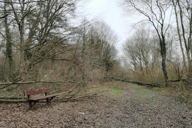 Tempête : l'ONF déconseille au public de se rendre en forêt ce week-end en Normandie et en Île-de-France