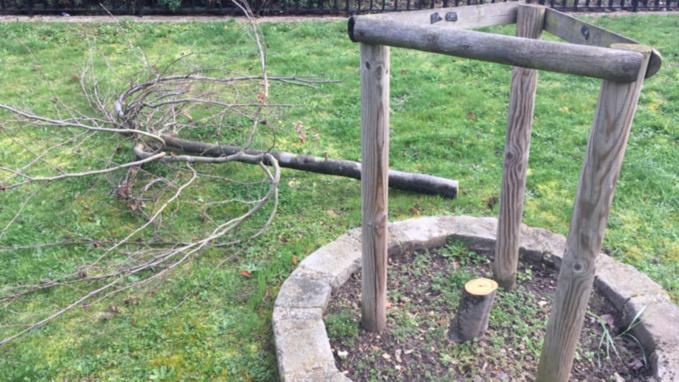Des arbres de la laïcité coupés dans quatre communes des Yvelines : vandalisme ou acte politique ?
