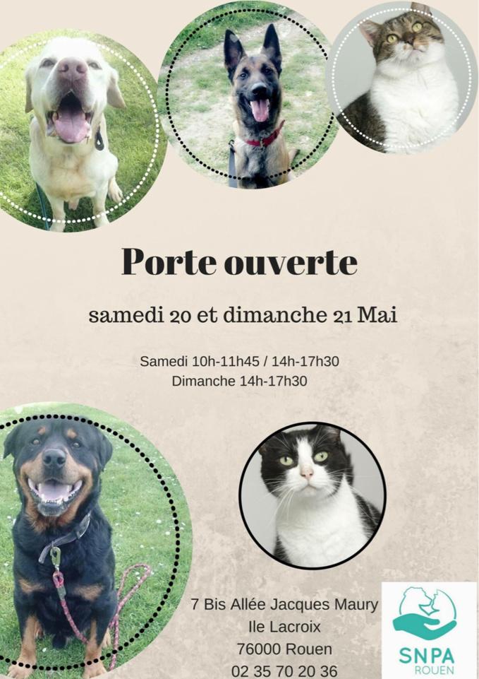 Vous voulez adopter un chat ou un chien ? Portes ouvertes ce week-end au refuge de la SNPA à Rouen