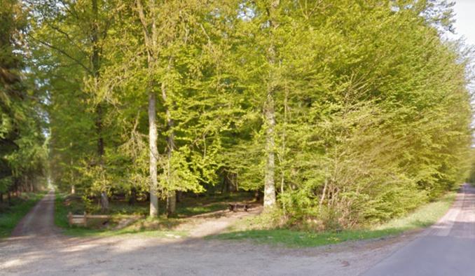 Un crâne humain découvert en forêt d'Arques-la-Bataille, près de Dieppe