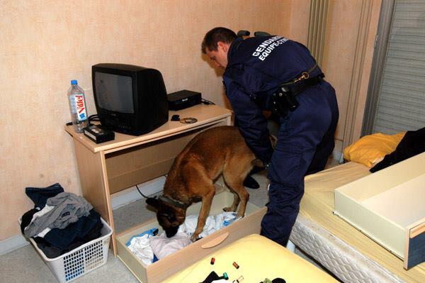 Lors des perquisitions avec le chien anti-drogue de l'équipe cynophile d'Evreux, les gendarmes de Brionne ont découvert de l'héroïne, de la résine de cannabis et de l'argent (Illustration © Gendarmerie/Facebook)