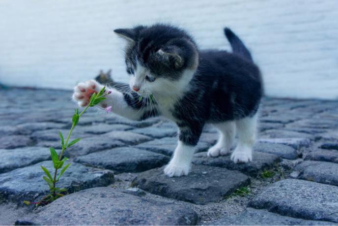 Le chaton de 4 mois n'a pas survécu à sa chute d'une dizaine de mètres (Illustration @ Pixabay)