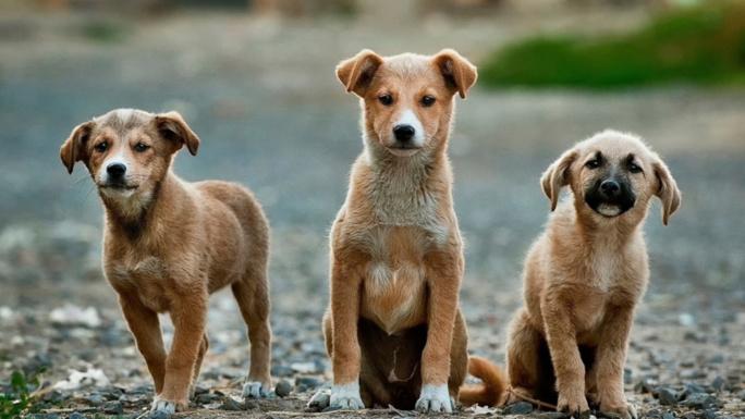 Yvelines : la police saisit 38 animaux dans un élevage canin à Andrésy pour mauvais traitement