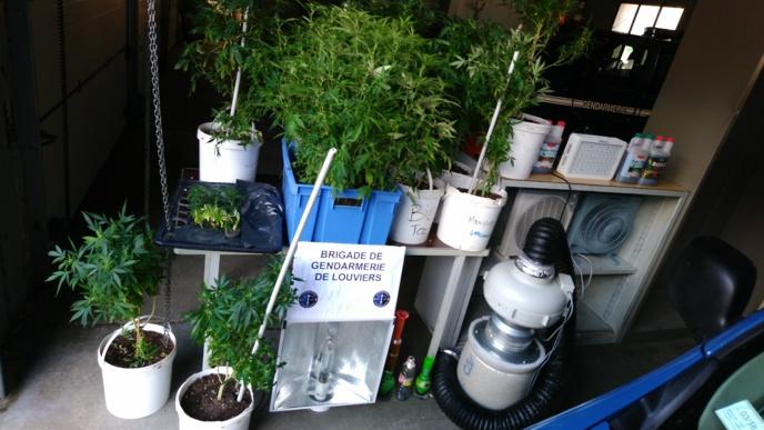 La perquisition réalisée à Jouy-sur-Eure permet notamment de découvrir une « chambre de culture », 41 pieds de cannabis ainsi qu'une faible quantité de cocaïne (Photo © Gendarmerie)