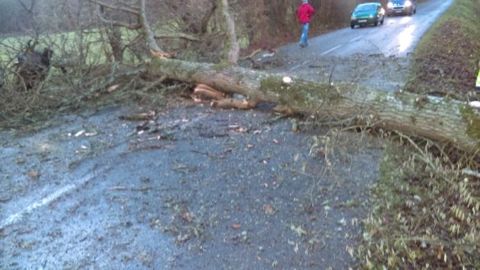 Plusieurs routes de l'Eure ont été coupées à la suite de chutes d'arbres .