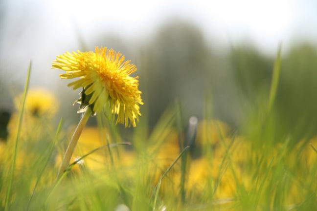 Jardin démonstratif de Gromesnil : participez à la création d'un insectodrome à Saint-Romain-de-Colbosc (Seine-Maritime)