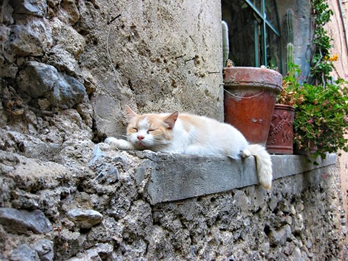 La tête couée du chat était posée sur un banc dans le jardin - Illustration © Pixabay