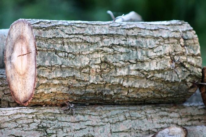 L'homme travaillait dans un bois lorsque l'accident est survenu - illutration © Pixabay