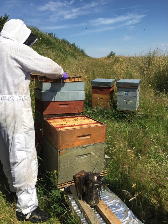 Dans le cadre du plan départemental de sauvegarde des messicoles et des pollinisateurs, des ruches ont été installées en 2018 au domaine d'Harcourt et sur le site archéologique de Gisacum - Photo © Département 27