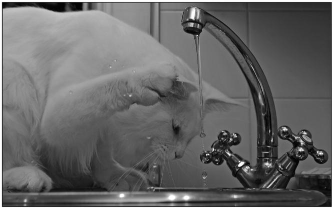 L'ARS déconseille très fortement de boire l'eau du robinet jusqu'à nouvel ordre  - Illustration © Pixabay