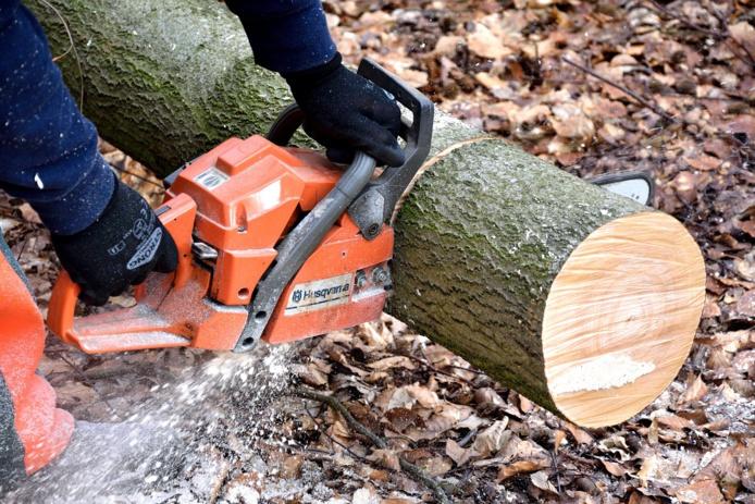 Les pompiers ont dû procéder au tronçonnage de l'arbre - Illustration © Pixabay