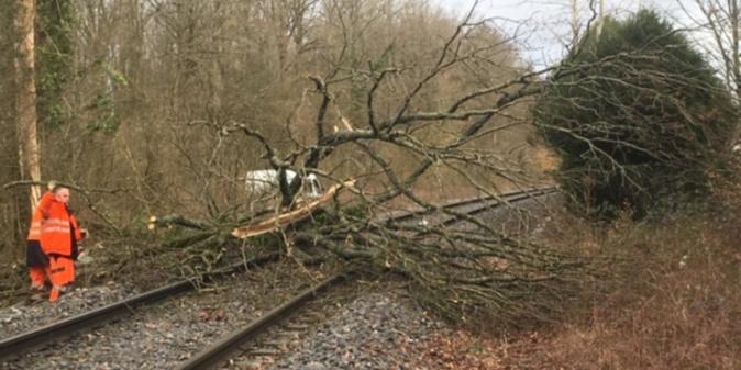 Plusieurs lignes de la SNCF ont été impactées par les chutes d'arbres et de branchages - Photo © SNCF