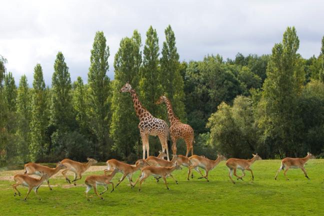 Photo © Zoo Safari de Thoiry