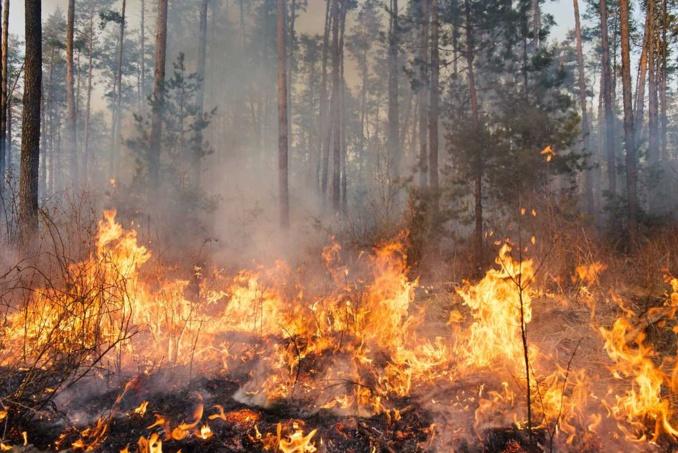 10 hectares de forêt avaient brûlé à 17h30, et le feu continuait de menacer  les parcelles environnantes - Illustration © Adobe Stock