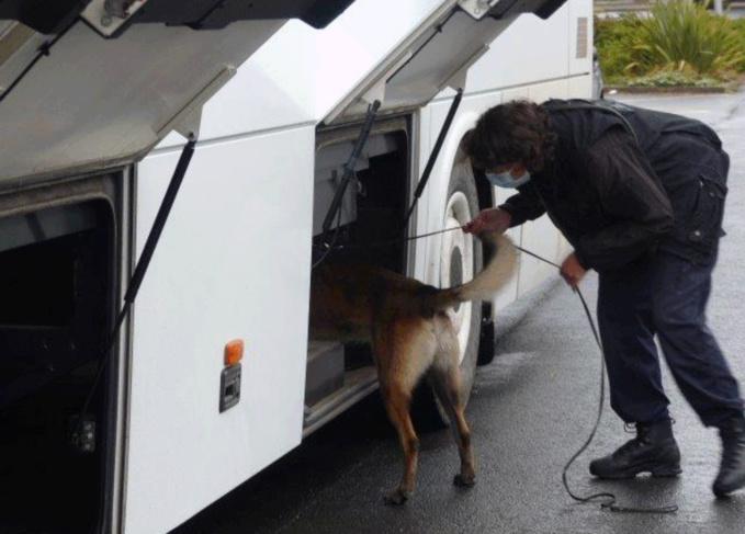Les policiers de l'équipe cynophile du Havre ont passé le car scolaire au crible avec leur chien anti-drogue - Photo © Commissariat de Bolbec/Twitter