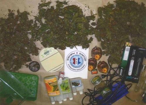 Les policiers ont saisi 2,7 kg d'herbe de cannabis et le matériel servant à la cultiver