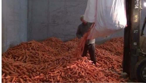 Les amphétamines étaient dissimulées dans le chargement de carottes (Photo : Douane française)