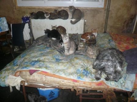 Les animaux et leur maîtresse vivaient des conditions inacceptables (Photo l'Ecole du Chat de Vernon)