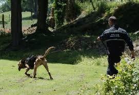 Le chien pisteur de la gendarmerie est souvent très efficace dans les recherches de personne (photo d'illustration)