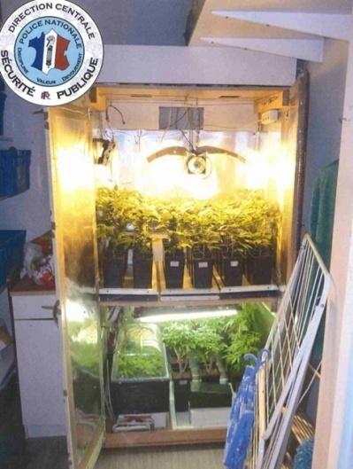L'armoire de culture contenait 42 plants d'herbe qui ont été saisis