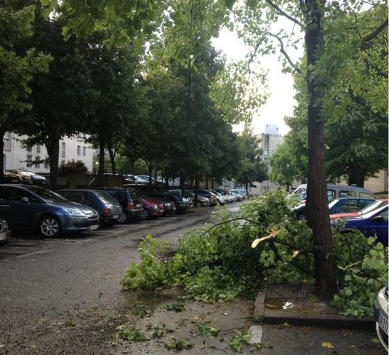 Les branches des arbres n'ont pas résisté aux bourrasques de vent, comme ici dans un quartier de Rouen (Photo Infonormandie)