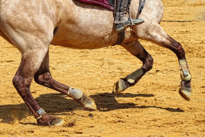 Le cheval serait retombé sur le cavalier qui avait chuté au sol - Illustration @ Pixabay