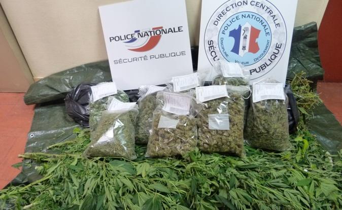 Les sachets en plastique contiennent 2,5Kg de têtes de cannabis dont la valeur marchande représente plusieurs milliers d'euros (Photo DDSP)