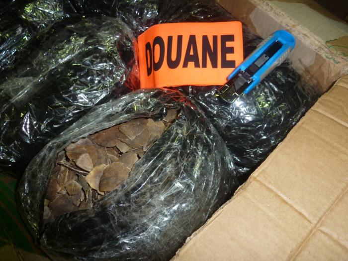 558 kg d'écailles de pangolins ont été saisis par les douaniers de Roissy en moins de cinq ans (Vidéo et photo Douane française)