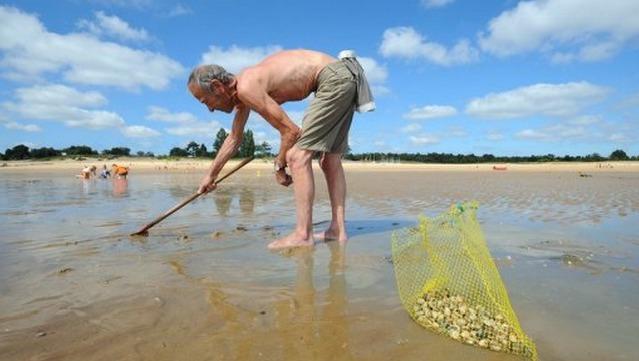 Le ramassage des coquillages filtreurs est interdit jusqu'à nouvel ordre entre le Cap d'Antifer et Veulettes-sur-Mer, en Seine-Maritime (Photo d'illustration)