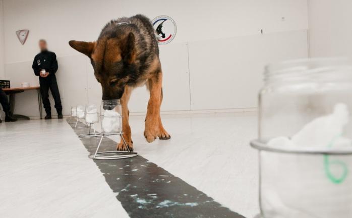 Les chiens anti-drogue de la police sont entraînés à détecter toutes sortes de produits stupéfiants (Photo @DGPN)
