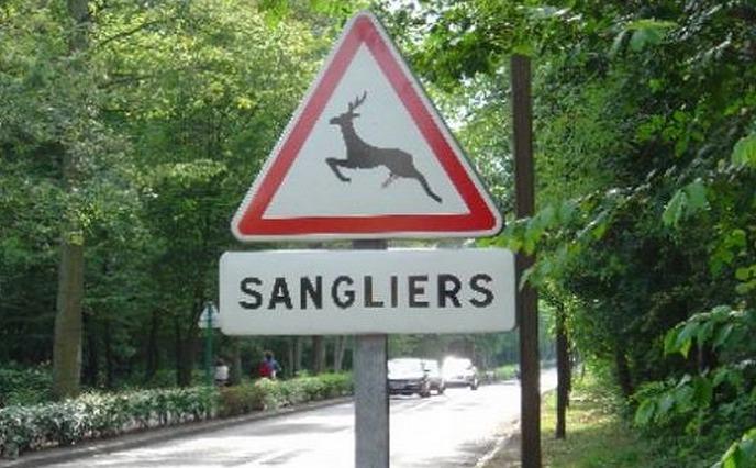 Les sangliers comme tous les grands animaux représentent un réel danger pour les usagers de la route (Photo d'illustration)