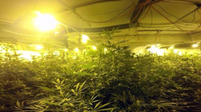 La villa de 300 m2 était entièrement équipée pour la culture d'herbe de cannabis (Photo Douane française)