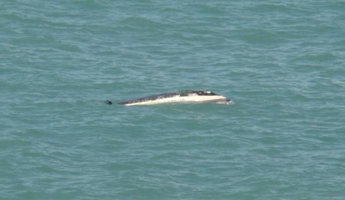 La vedette de plaisance a chaviré à environ 300 mètres au nord de Granville (Photos : Marine nationale/Sémaphore de Granville)