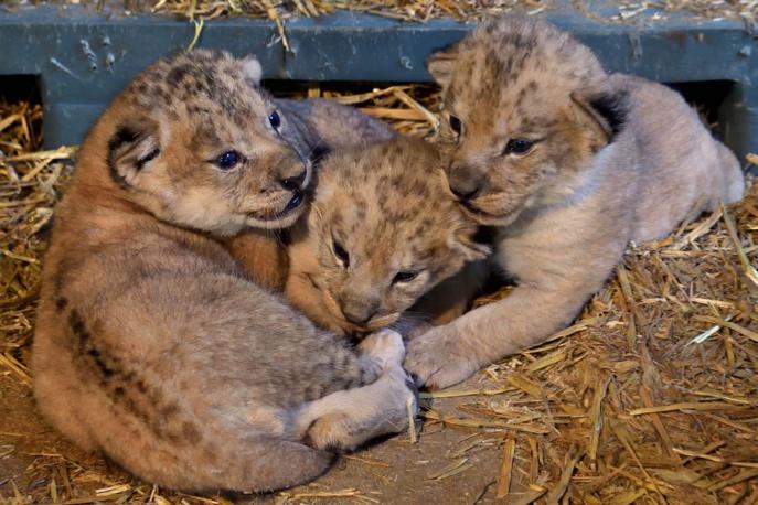 De beaux bébés....
