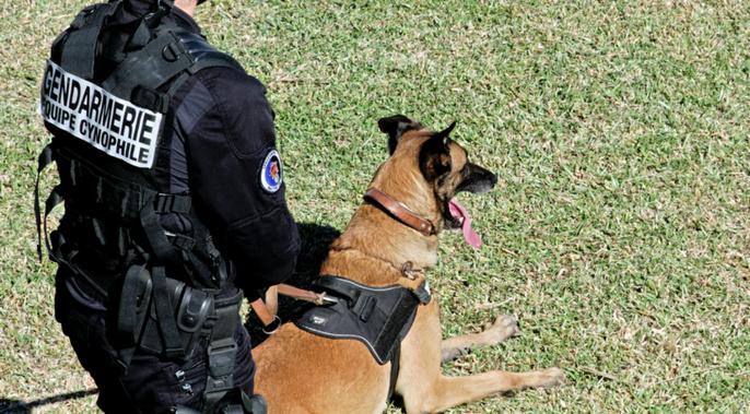Les gendarmes ont mobilisé leur chien pisteur (Illustration)