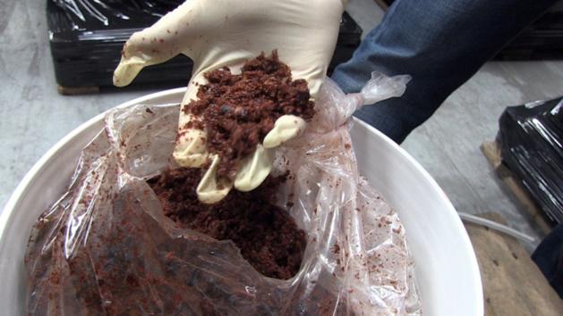 Port du Havre : 15 tonnes de tabac à narguilé saisies par les douaniers