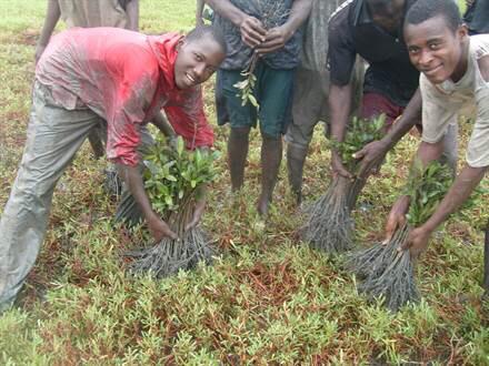 L'ONG havraise « Plantons Utile » lauréate du Prix Elan pour le Changement 2015 de l'ONU