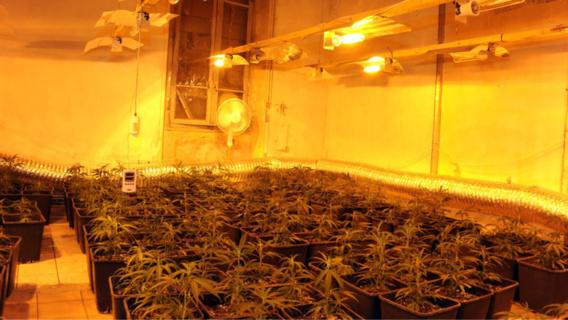"""Plus de 900 pieds de cannabis saisis par la douane dans une """"ferme"""" près de Paris"""