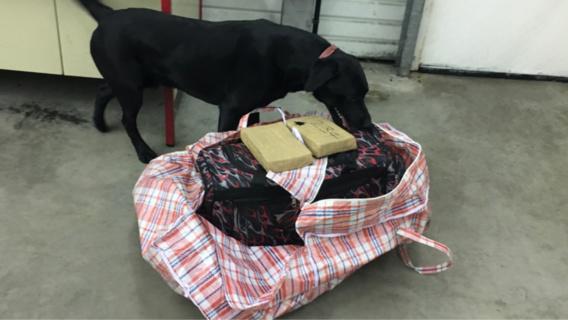 Le chien anti-drogue a rapidement reniflé les sacs qui contenaient la cocaïne (Photos@Douane française)