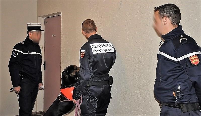 La perquisition des gendarmes avec le chien anti-drogue a été fructueuse (Illustration ©infonormandie)