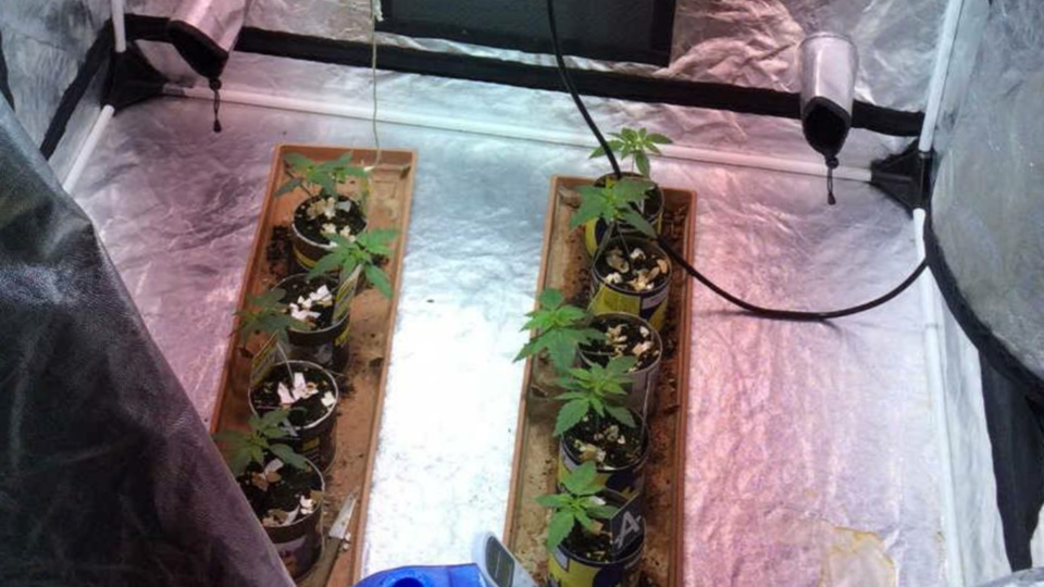 Des plants de cannabis en culture ont été découverts dans le logement du suspect (photo@gendarmerie)