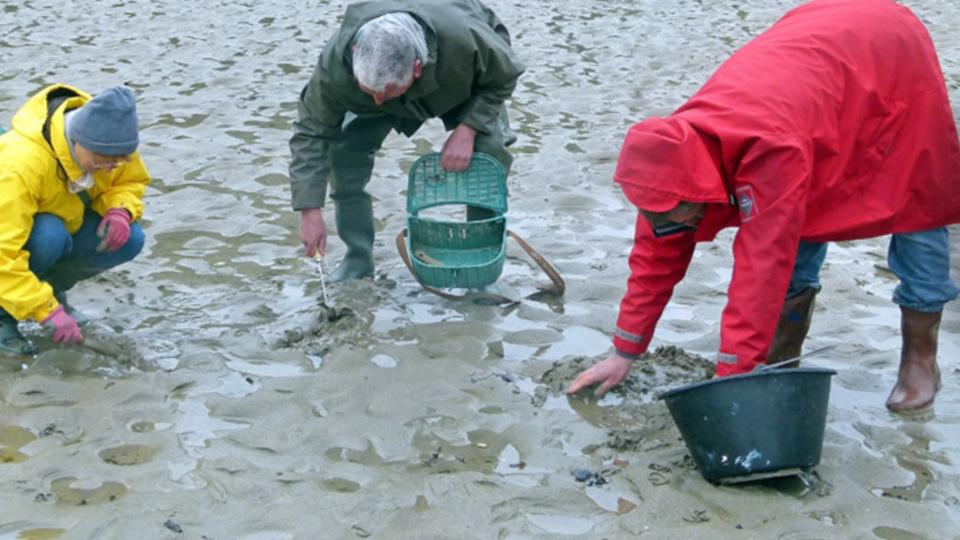 Le préfet maritime invite les pêcheurs à pied à redoubler de vigilance (Illustration)