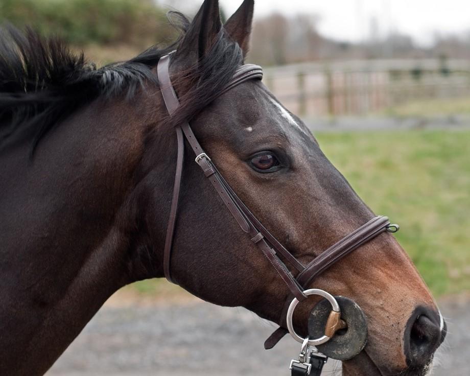 A la vue du chien qui grognait, le cheval aurait pris peur et se serait cabré (illustration © Pixabay)