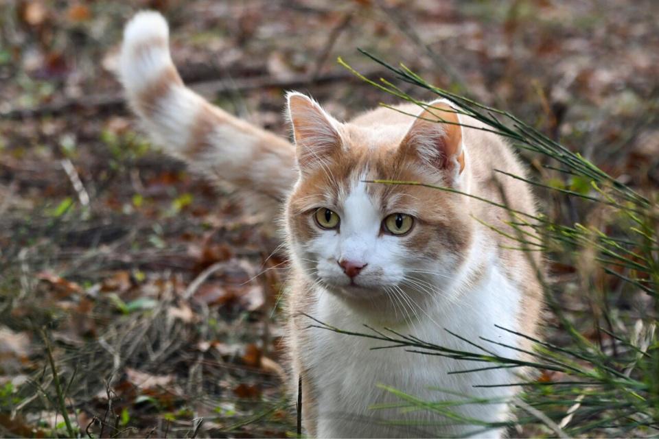 A Mont-Saint-Aignan, deux chats ont été la cible mortelle d'un mystérieux tireur - Illustration @ Pixabay