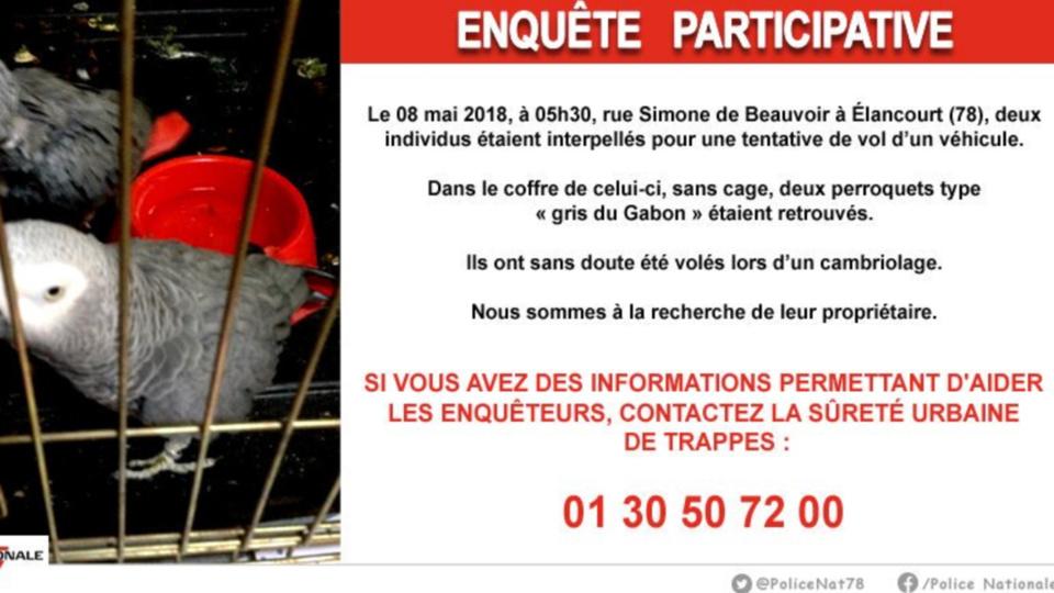 La police des Yvelines recherche le propriétaire de deux perroquets volés lors d'un cambriolage