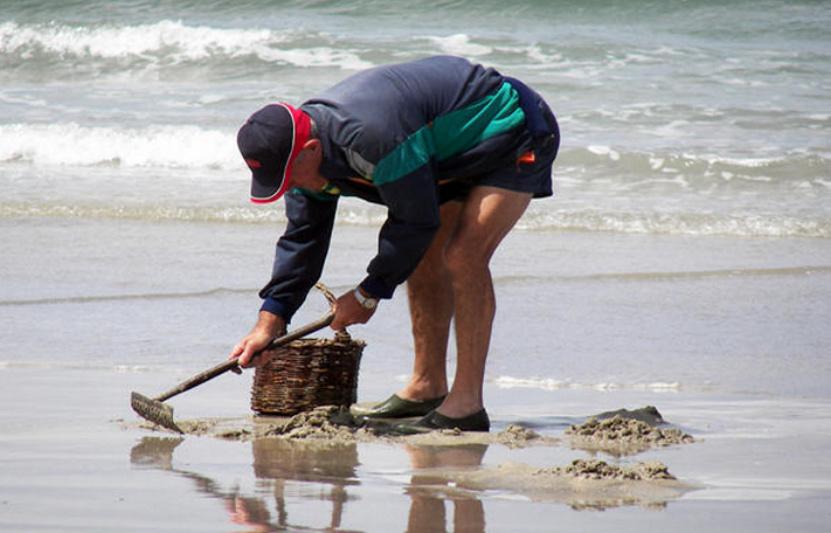 La pêche à pied de loisir et professionnelle est interdite temporairement - Illustration