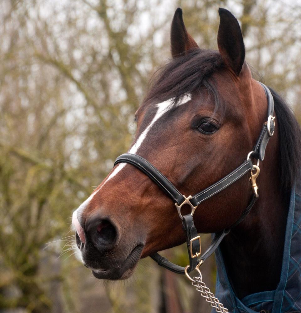 Le cheval aurait trébuché en arrivant au box - Illustration @ Pixabay