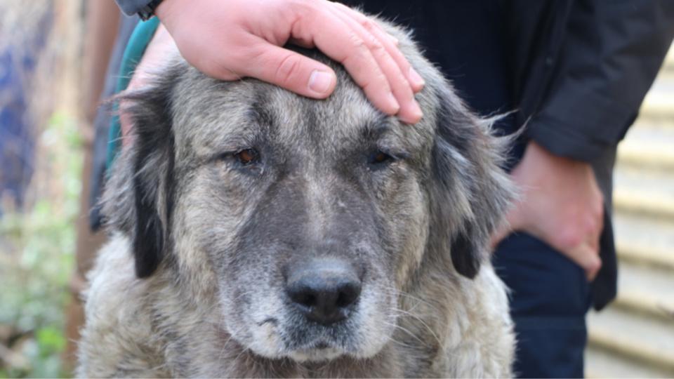« Les chiens pataugeaient dans la boue au milieu de leurs excréments et d'objets dangereux » - Photo © SPA