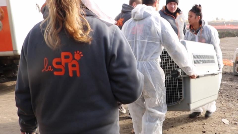 """Opération """"coup de poing"""" dans un élevage non conforme des Yvelines : douze chiens sauvés par la SPA"""